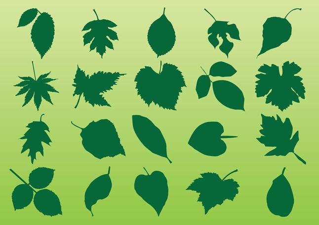 Plant Leaves Vectors free