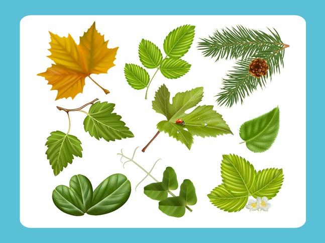 Realistic Leaf Vectors free