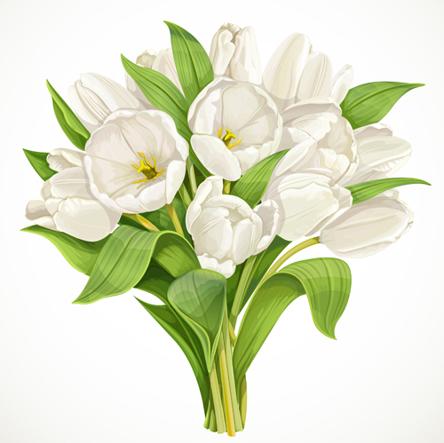 Beautiful White Tulips Vector Free Free Download