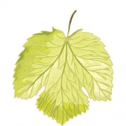 Simple grapes leaf design vector 01 free