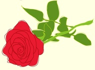 Roses Illustrations vector free