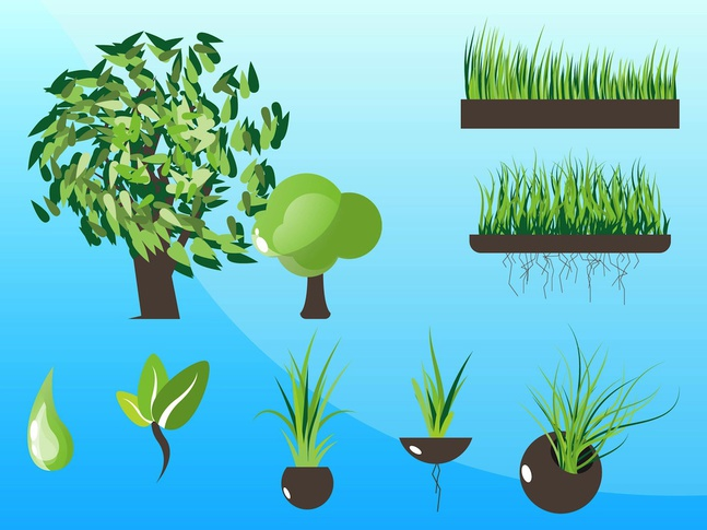 Plants Graphics Vectors free