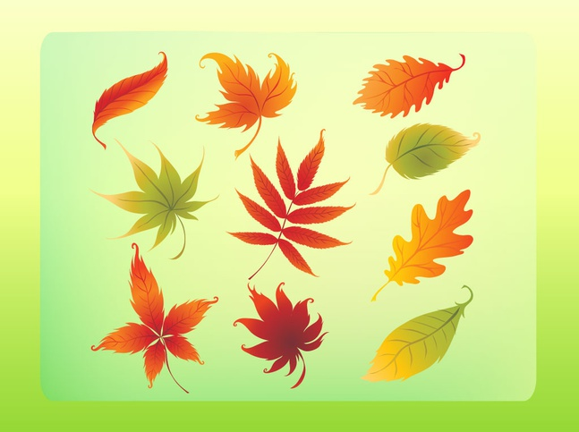 Autumn Leaves Vector Set free