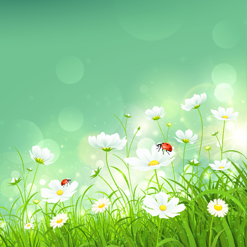 Coccinella and white flower shiny background vector free ...