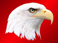 Bald Eagle vector free