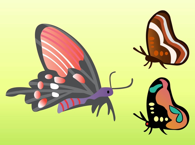 Butterfly Vectors free