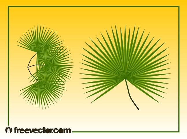 Palm Leaves Graphics vector free