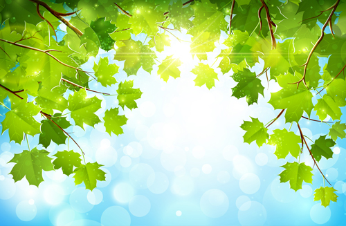 Sunlight and green leaf nature background 02 free