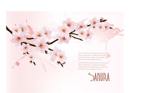 Beautiful cherry vector background art free