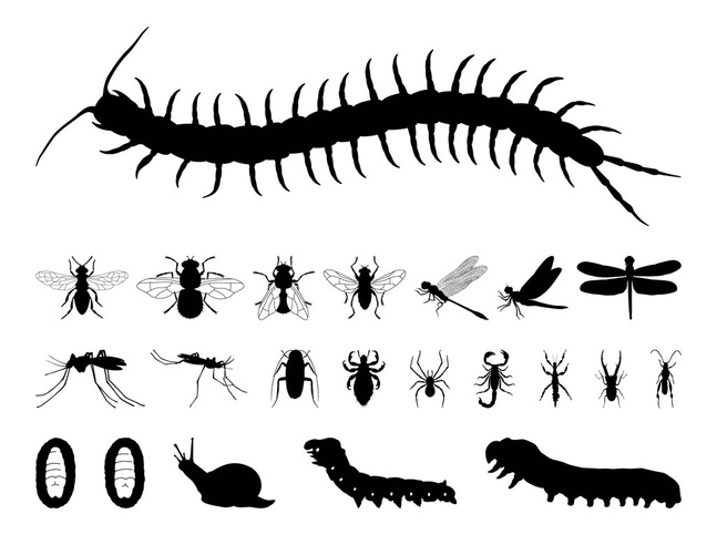 Insects Silhouettes Set vector free