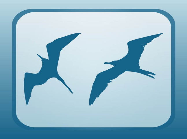 Flying Seagulls vector free