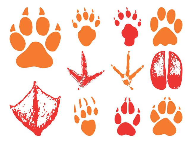 Animal Footprints vector free
