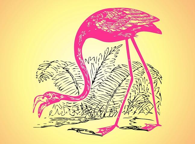 Flamingo Sketch vector free