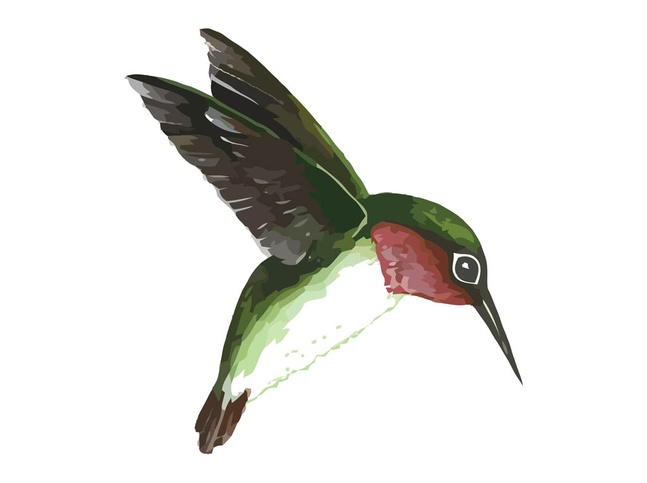 Flying Humming Bird vector free